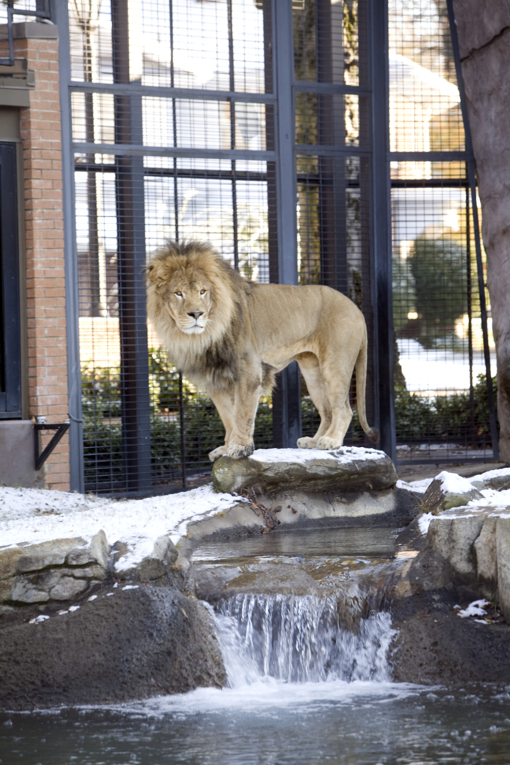 photo of Lion