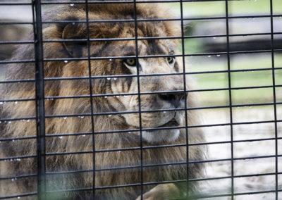 Photo of Leo the Lion Mascot